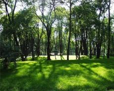 Полтавченко опроверг слухи о застройке жильем Прохоровского лесопарка