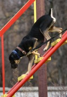 С 2014 года бюджет Петербурга профинансирует строительство площадок для выгула собак
