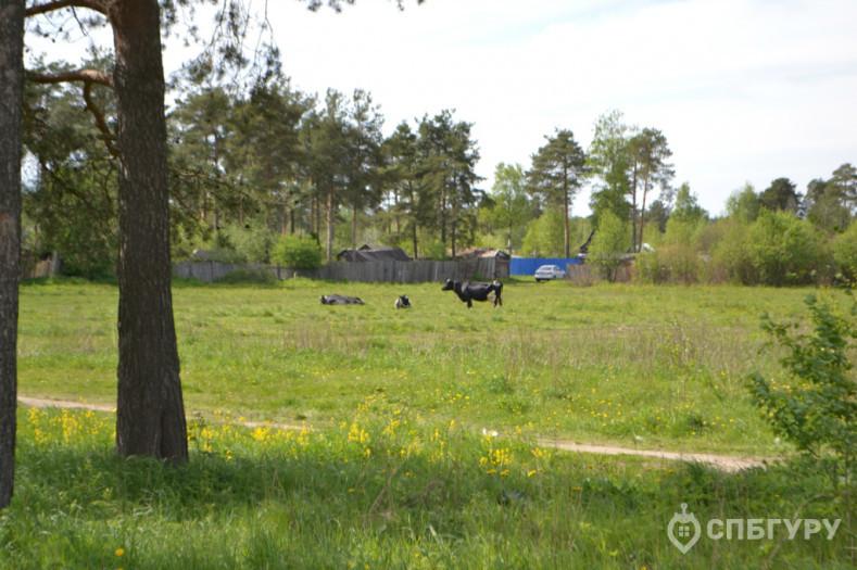 """ЖК """"Парголово"""": неторопливое строительство в тихом поселке - Фото 19"""