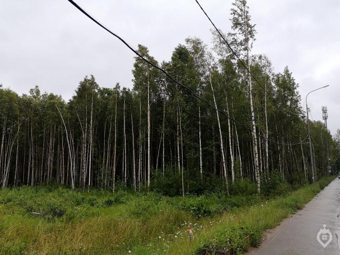 "ЖК ""FoRest"": под шум деревьев и ЗСД - Фото 41"