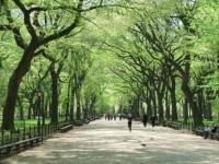В Санкт-Петербурге может стать больше зеленых зон