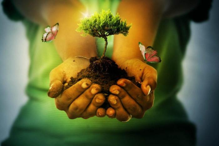За год экологическая ситуация в Петербурге улучшилась